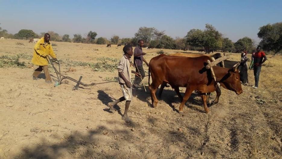 Ūkininkų k Zambija